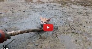 cat trapped in mud slush