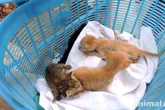 cats rescued from kitchen exhaust