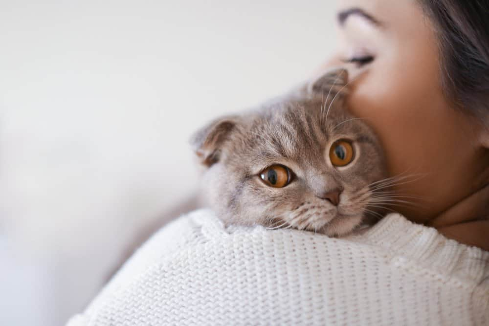 cat lying on a wman's shoulder