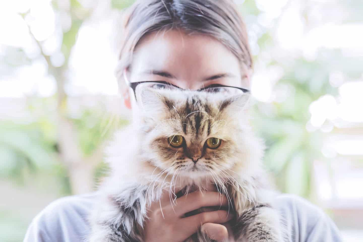 woman holding a cute persian kitty