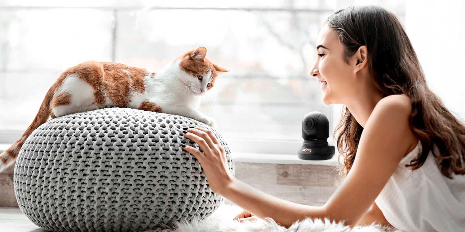 woman playing with cute cat near window